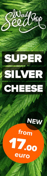 Weed Seed Shop - Super Silver Cheese Feminized